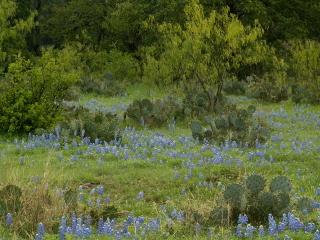 Mesquite field