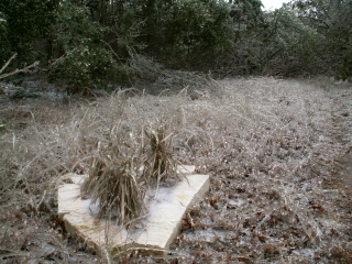 Frozen field of grass